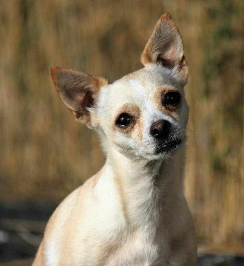 Hondenfotografie hondenfotograaf